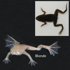 Products tagged with African Dwarf Frog