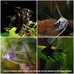 Products tagged with how big of a tank do I need for a angel fish