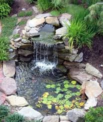 Maintaining A Healthy Pond