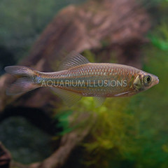 Products tagged with community fish for freshwater aquariums