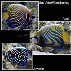 Products tagged with aquarium illusions fish