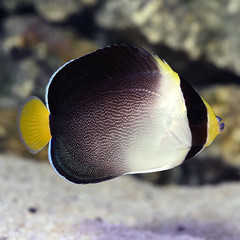 Products tagged with what do angel fish eat