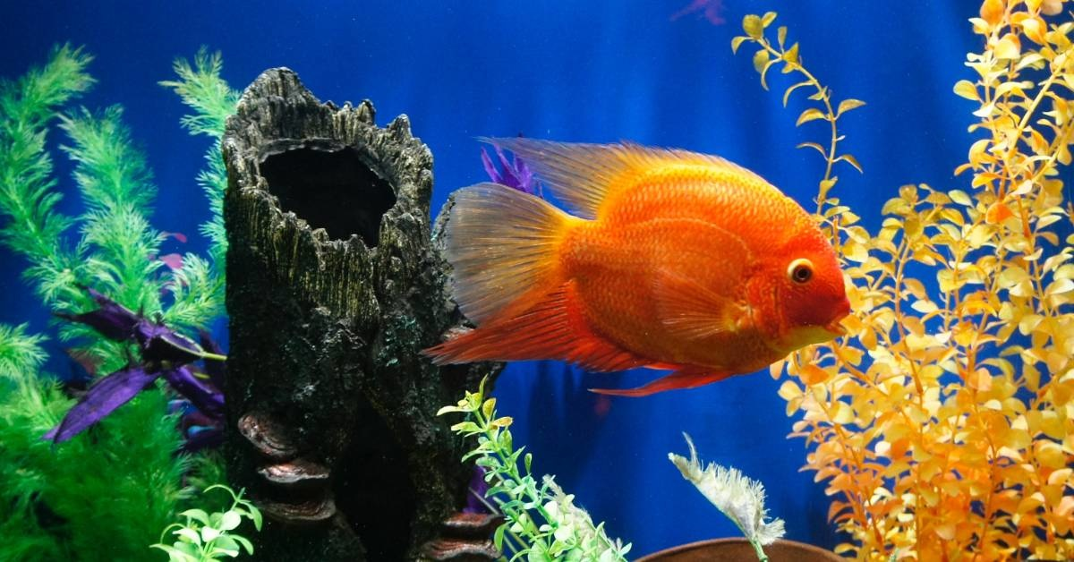 How to Beautify Your Aquarium With Decorations