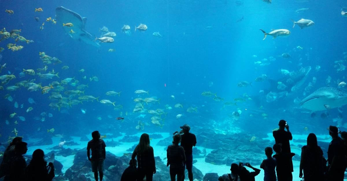 Six Amazing Aquariums to Inspire You in 2020