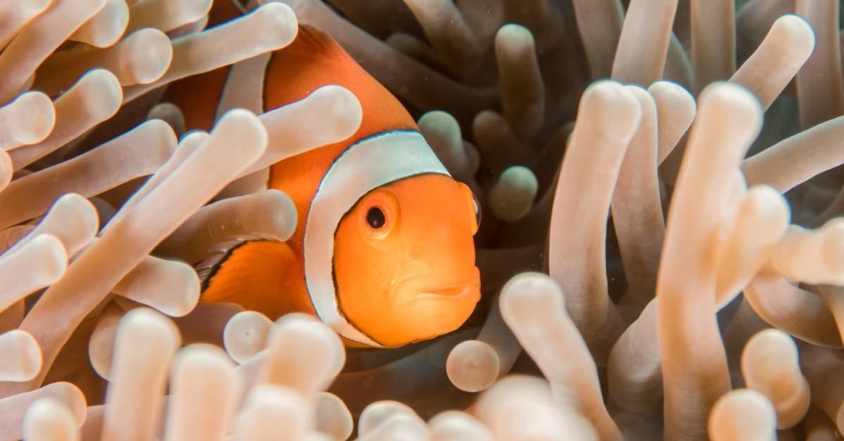 Our Favorite Saltwater Aquarium Fish