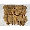 "30 medium Catappa Leaves (6"")"