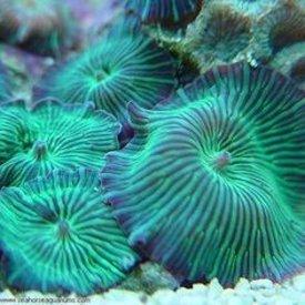 Metallic Green Mushroom