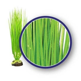 Weco Asian Hairgrass 18