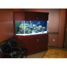 Aquarium Illusions Custom Shape by Aquarium Illusions