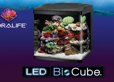 Coralife Biocubes Kits & Stands