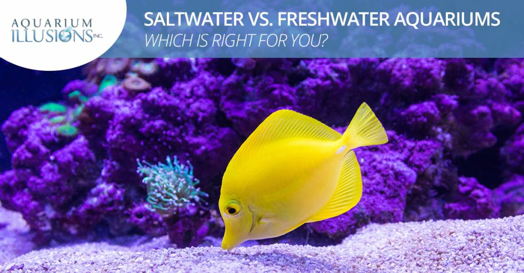 Saltwater vs. Freshwater Aquariums — Which Is Right For You?