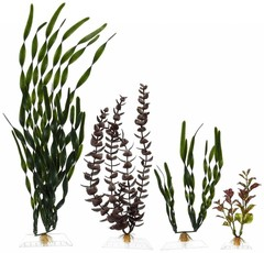 Products tagged with aquarium plants