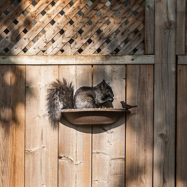- ABBOTT CAST IRON LG HALF ROUND BIRD BATH/FEEDER