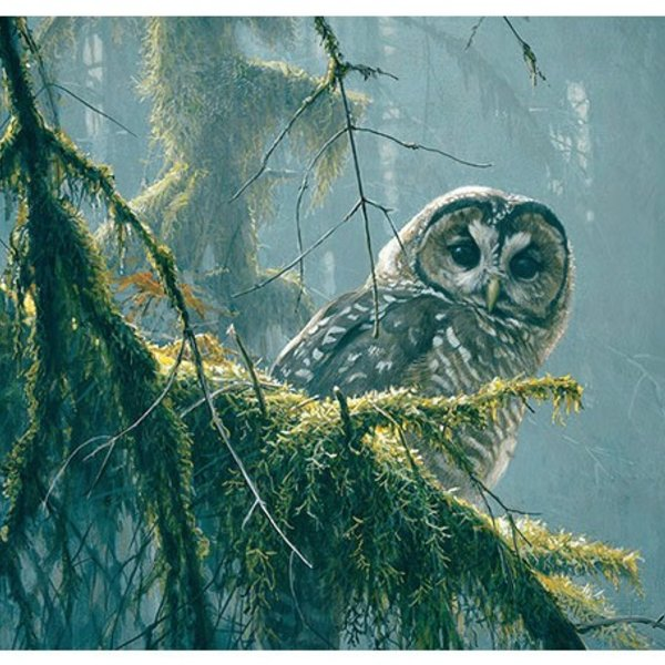 - COBBLE HILL SPOTTED OWL MOSSY BRANCHES PUZZLE 500PC