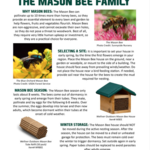 - WELLIVER OUTDOORS CEDAR MASON BEE HOUSE