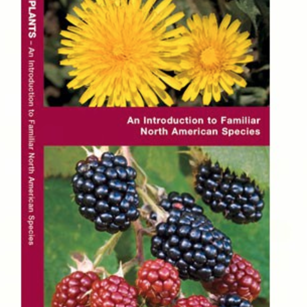 - POCKET NATURALIST: EDIBLE WILD PLANTS OF NORTH AMERICA FOLDING GUIDE