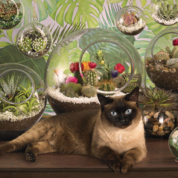 - COBBLE HILL TERRARIUM CAT PUZZLE 1000PC