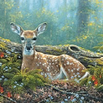 - PUMPERNICKEL PRESS BIRTHDAY CARD ENDEARING FAWN