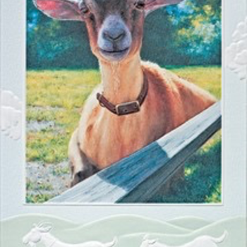 - PUMPERNICKEL PRESS BIRTHDAY CARD HEY KID