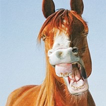 - PUMPERNICKEL PRESS BIRTHDAY CARD HORSE LAUGH
