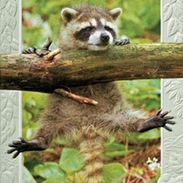 - PUMPERNICKEL PRESS ENCOURAGEMENT CARD HANG IN THERE