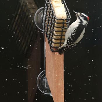 - SONGBIRD ESSENTIALS SUET WINDOW FEEDER