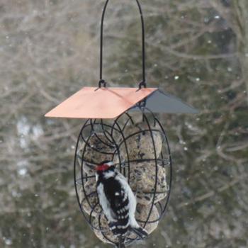 - SONGBIRD ESSENTIALS SUET BALL FEEDER W/COPPER ROOF