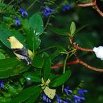- SONGBIRD ESSENTIALS EASY MISTER