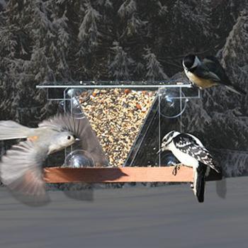 - SONGBIRD ESSENTIALS WINDOW 3 FEEDER