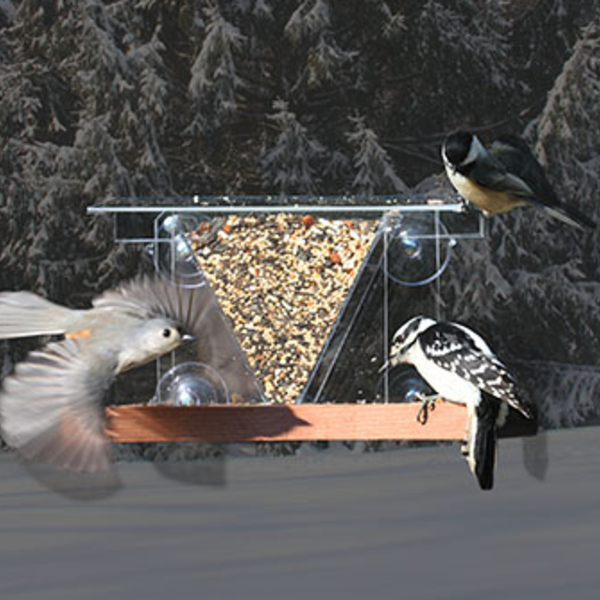 - SONGBIRD ESSENTIALS WINDOW 3 FEEDER