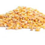 -WHOLE CORN SEED #25 LB. STORE PICKUP ONLY