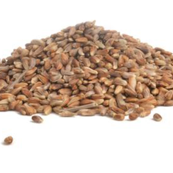 -NUTRASAFF SAFFLOWER SEED #20 LB. STORE PICKUP ONLY