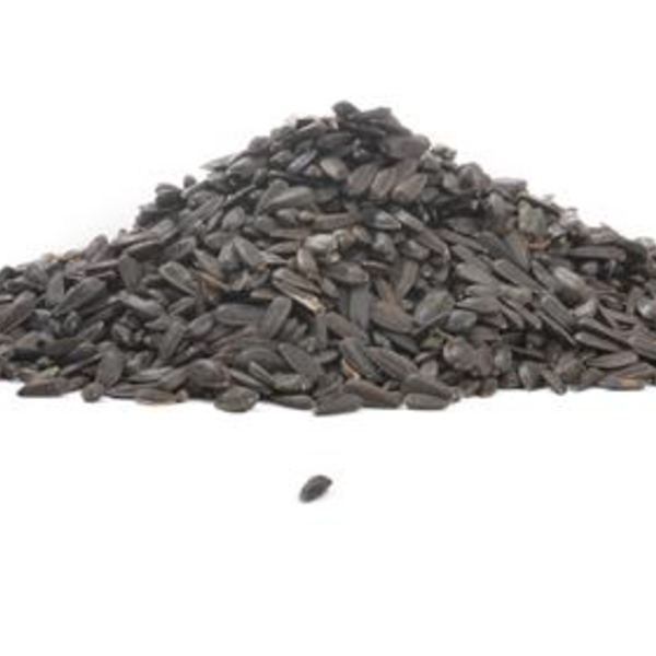 -BLACK OIL SUNFLOWER SEED #50 LB. In Store Pickup Only