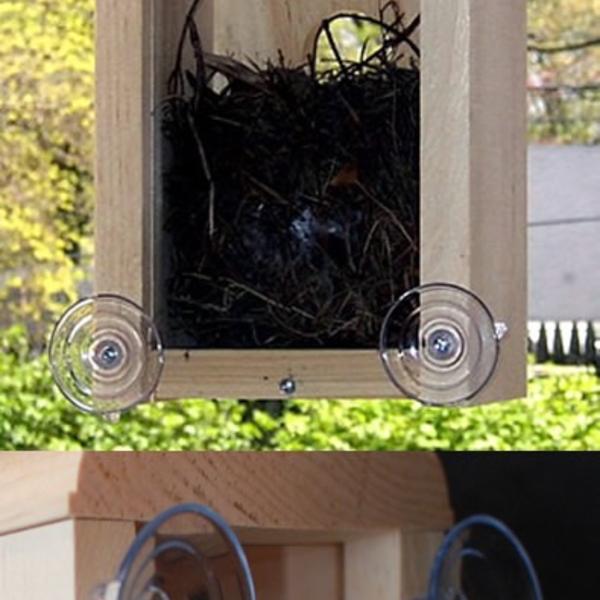 - COVESIDE WINDOW NEST BOX BIRD HOUSE