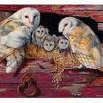 - COBBLE HILL BARN OWLS PUZZLE 1000PC.