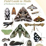 - PETERSON FIELD GUIDE TO MOTHS N.E. NORTH AMERICA