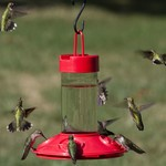 - SONGBIRD ESSENTIALS DR. JB'S 16OZ RED HUMMINGBIRD FEEDER