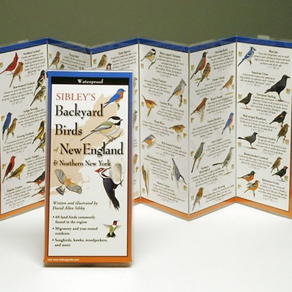 - SIBLEY'S BACKYARD BIRDS OF THE NORTHEAST FOLDING GUIDE