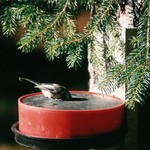 - BIRD WATERER FOR WINTER