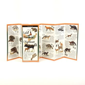 - LAND MAMMALS OF THE NORTHEAST FOLDING GUIDE