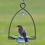 - BIRDS CHOICE BLUEBIRD FLOWER FEEDER