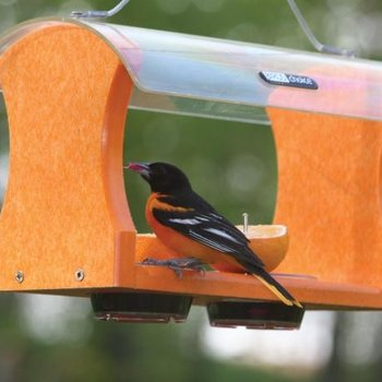 - BIRDS CHOICE RECYCLED ORIOLE FEEDER
