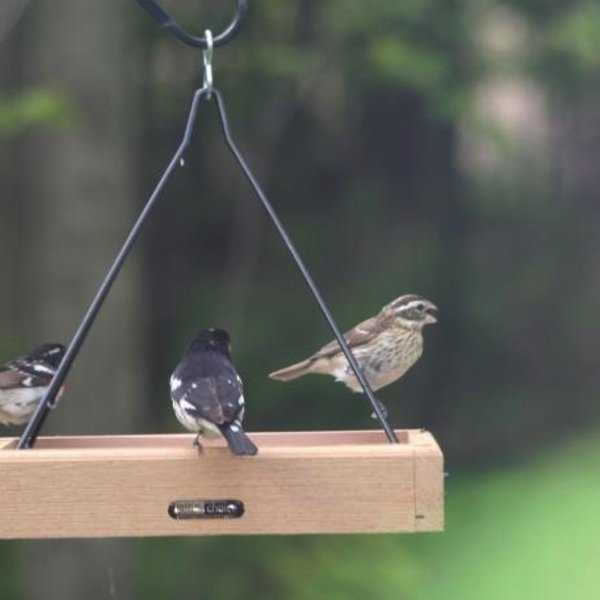 """- BIRDS CHOICE 11""""X10"""" CEDAR HANGING TRAY FEEDER"""