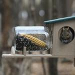 - BIRDS CHOICE RECYCLED SQUIRREL JAR FEEDER