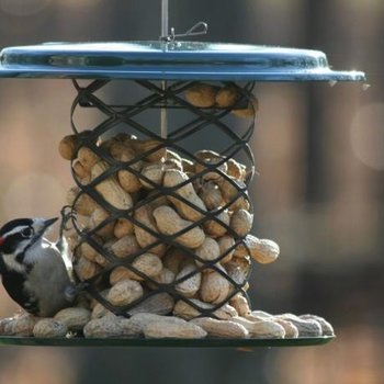 - BIRDS CHOICE 2QT. MAGNET MESH WHOLE PEANUT FEEDER