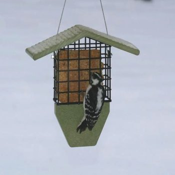 - BIRDS CHOICE RECYCLED GREEN SOLUTIONS SUET FEEDER
