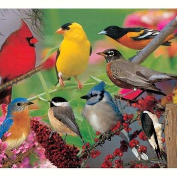 - IMPACT PHOTOGRAPHICS BACKYARD BIRDS PUZZLE 500PC