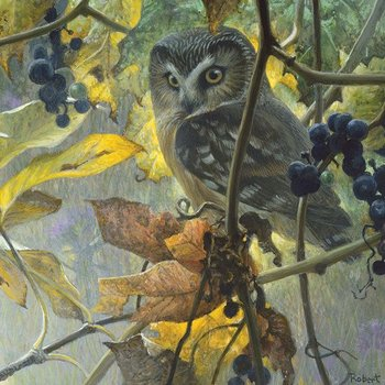 - COBBLE HILL SAW-WHET OWL & WILD GRAPES PUZZLE 500 PC