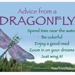 -ADVICE FROM A DRAGONFLY MAGNET