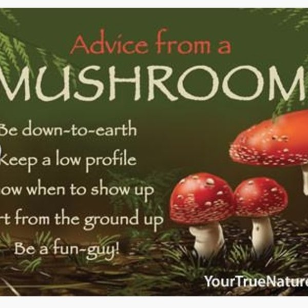 -ADVICE FROM A MUSHROOM MAGNET